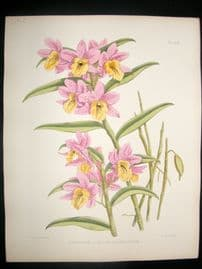 Fitch & Warner Orchid Album 1880s HC. Dendrobium Luteolum Chlorocentrum 322
