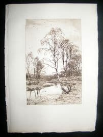 Frederick Slocombe 1885 Etching. Birch Trees