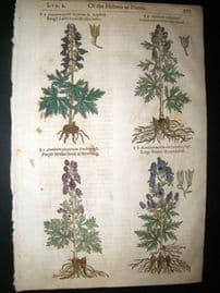 Gerards Herbal 1633 Hand Col Botanical Print. Aconitum Monkshood
