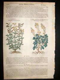 Gerards Herbal 1633 Hand Col Botanical Print. Bastard Shrub Trefoil etc