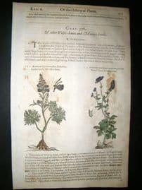 Gerards Herbal 1633 Hand Col Botanical Print. Blue Wolfsbane