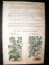 Gerards Herbal 1633 Hand Col Botanical Print. Burdock