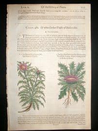 Gerards Herbal 1633 Hand Col Botanical Print. Carline Thistle