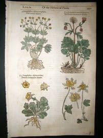 Gerards Herbal 1633 Hand Col Botanical Print. Caryophyllata, Cloves