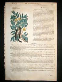 Gerards Herbal 1633 Hand Col Botanical Print. Cassia Fistula, Pudding Pipe Tree