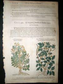 Gerards Herbal 1633 Hand Col Botanical Print. Celandine Poppy