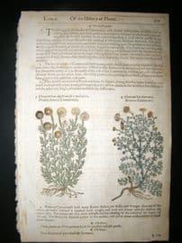 Gerards Herbal 1633 Hand Col Botanical Print. Chamomile