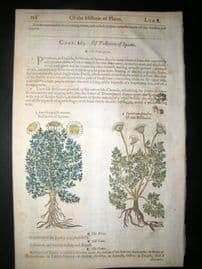 Gerards Herbal 1633 Hand Col Botanical Print. Chamomile, May Weed, Pellitory