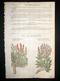 Gerards Herbal 1633 Hand Col Botanical Print. Chaste Tree