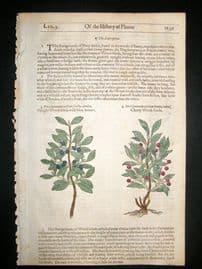 Gerards Herbal 1633 Hand Col Botanical Print. Cherry Woodbind, Dwarf Honeysuckle
