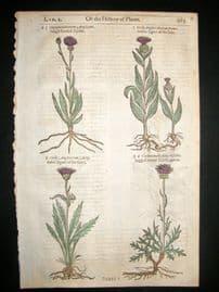 Gerards Herbal 1633 Hand Col Botanical Print. Cirsium Thistles