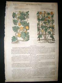 Gerards Herbal 1633 Hand Col Botanical Print. Citrull Coloquintida
