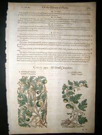 Gerards Herbal 1633 Hand Col Botanical Print. Citrull Cucumber