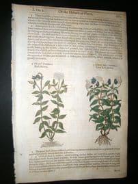 Gerards Herbal 1633 Hand Col Botanical Print. Clematis, Bush Bower