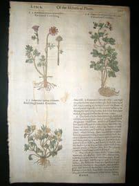 Gerards Herbal 1633 Hand Col Botanical Print. Columbine Crowfoot, Ranunculus