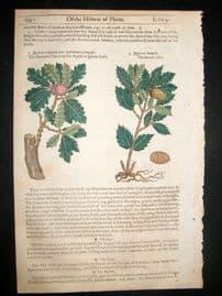 Gerards Herbal 1633 Hand Col Botanical Print. Common Oak, Acorn Tree