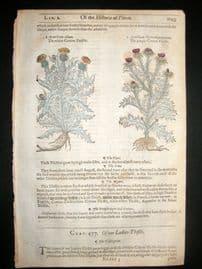 Gerards Herbal 1633 Hand Col Botanical Print. Cotton & Ladies Thistle