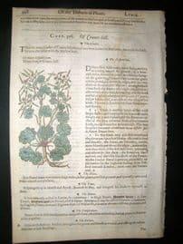 Gerards Herbal 1633 Hand Col Botanical Print. Cranes Bill, Egyptian Codded Mallow
