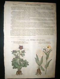Gerards Herbal 1633 Hand Col Botanical Print. Crowfoot - Ranunculus