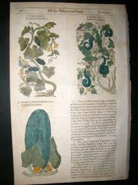 Gerards Herbal 1633 Hand Col Botanical Print. Cucumbers, Vegetable