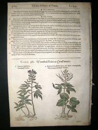 Gerards Herbal 1633 Hand Col Botanical Print. Dentaria, Toothed Violets