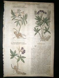 Gerards Herbal 1633 Hand Col Botanical Print. Dentaria, Violets