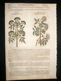 Gerards Herbal 1633 Hand Col Botanical Print. Elder Berries, Ethiopia Hartwort