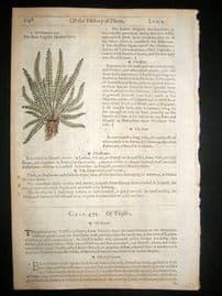 Gerards Herbal 1633 Hand Col Botanical Print. English Maiden Hair Fern