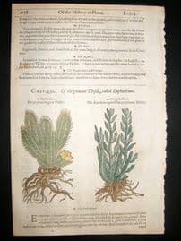 Gerards Herbal 1633 Hand Col Botanical Print. Euphorbium, Melon Cactus