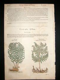 Gerards Herbal 1633 Hand Col Botanical Print. Ferns, Bedstraw, Madder