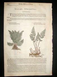 Gerards Herbal 1633 Hand Col Botanical Print. Fountain & Dwarf Fern