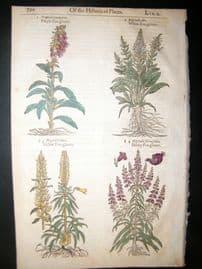 Gerards Herbal 1633 Hand Col Botanical Print. Fox Gloves