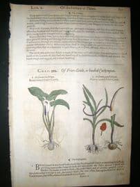 Gerards Herbal 1633 Hand Col Botanical Print. Friar's Cowl, Asarabacca
