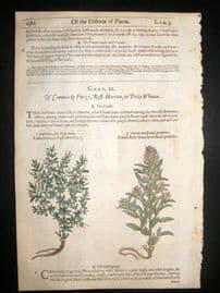 Gerards Herbal 1633 Hand Col Botanical Print. Genista, Scorpion Furze
