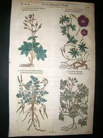 Gerards Herbal 1633 Hand Col Botanical Print. Geranium Bloody Cranesbill