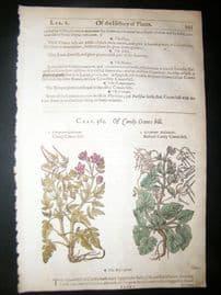 Gerards Herbal 1633 Hand Col Botanical Print. Geranium Candy Cranesbill