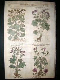 Gerards Herbal 1633 Hand Col Botanical Print. Geranium Cranesbill