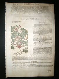 Gerards Herbal 1633 Hand Col Botanical Print. Geranium Herb Robert, Cranesbill