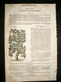 Gerards Herbal 1633 Hand Col Botanical Print. Gooseberry Fruit, Yarrow
