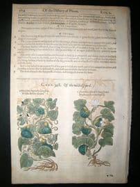 Gerards Herbal 1633 Hand Col Botanical Print. Gourd Vegetable