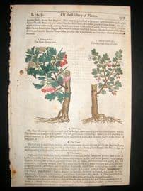 Gerards Herbal 1633 Hand Col Botanical Print. Hawthorn Tree, Goats Thorne