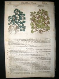 Gerards Herbal 1633 Hand Col Botanical Print. Hedera, Ivy