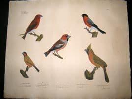 Goldfuss C1830 LG Folio Hand Colored Bird Print. Finches 304