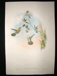 Gould Family of Hummingbirds C1860 HC Bird Print. Golden Throated Hummingbird