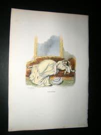 Grandville des Animaux 1842 Hand Col Print. Lazy Cat