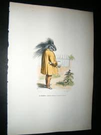 Grandville des Animaux 1842 Hand Col Print. Poor Sleeping Hedgehog