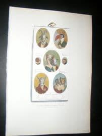 Grandville des Animaux 1842 Hand Col Print.  Toucan, Ostrich, Pig, Goat