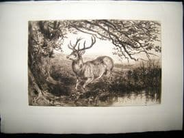 Heywood Hardy 1885 Etching. Stag and Tree