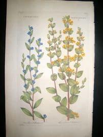 Hill C1760 Folio Hand Col Botanical Print. Crotalaria Rattlewort 11