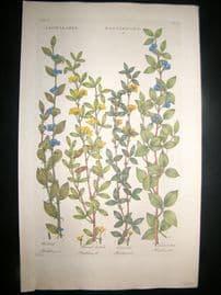 Hill C1760 Folio Hand Col Botanical Print. Crotalaria Rattlewort 12